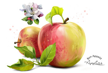 Apples, flowers and splashes of watercolor painting
