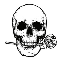 Monochrome skull with rose vector illustration