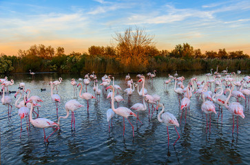 Papiers peints Flamingo Flamants rose en camargue
