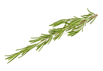 Twig of rosemary isolated on a white background