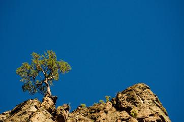 Lone tree on crag