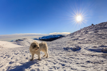 dog on the mountain