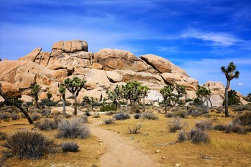 Wall Mural - Joshua Tree National Park, landscape with forest, rocks and hiking trail, California, USA