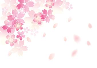 優しい桜 和柄 白