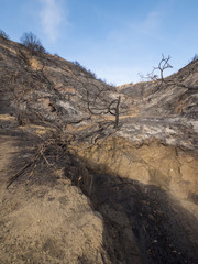 Burnt and Charred Hillside in California