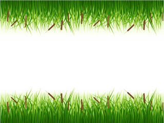 Papyrus bush, green color vector image on a white background