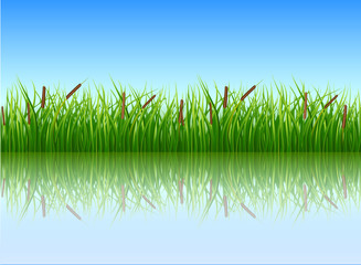Papyrus bush, green color vector image on a blue background