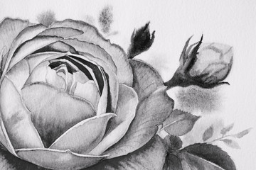 Black and white roses flower. Watercolor paintings