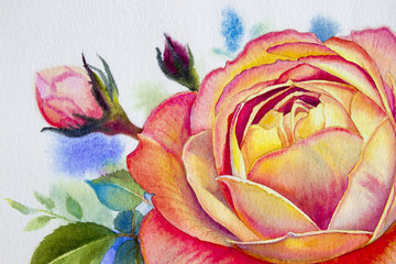 Orange pink rose flower. Watercolor paintings