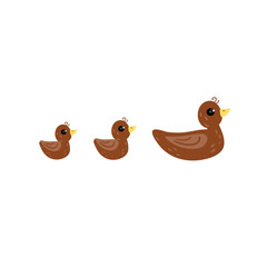 Brown duck and her ducklings cartoon vector Illustration