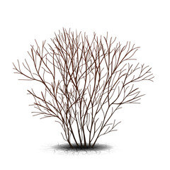bush with shadow without leaves