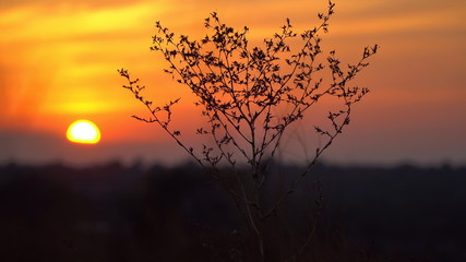 Contour dry bush at sunset background