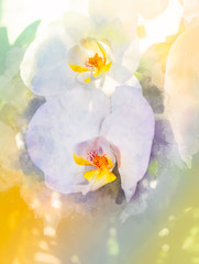 orchids flower and Softly blurred watercolor background.