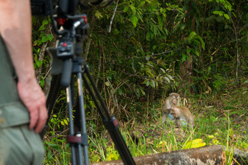 Photographer take Video Clip or Photograph of Northern Pig-Tailed macaque