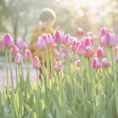 Walking little child in park with blooming pink tulips on foreground. Sunny day. Blurred abstract image for spring, summer creative background, pantone fashion colors