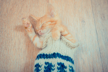 Little red kitten. The kitten lies on the fluffy carpet at home. Little Kitten Sleeps. Close-up of a sleeping kitten. cat in the sock.  cat in a knitted plaid
