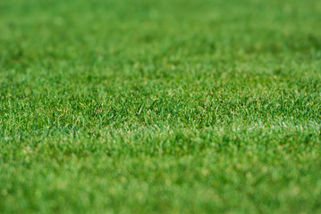 American Football grass field close up