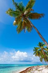 Foto op Plexiglas Asia land Palm Ocean Sky caribbean coast Dominican Republic