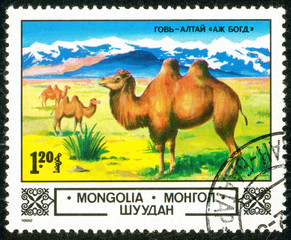 Ukraine - circa 2018: A postage stamp printed in Mongolia show Bactrian Camel or Camelus bactrianus in Gobi Desert. Series: Animals and landscapes. Circa 1982.