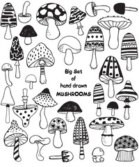 Big set of sketch hand drawn doodle mushrooms. Vector black and white illustration. Polka dot striped caps and stalks. Fresh organic food or drugs isolated on white. Truffle, chanterelle, champignon