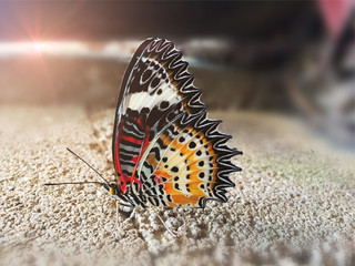 The colorful butterfly on concrete floor with sunset flare.