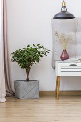Plant in bright apartment interior