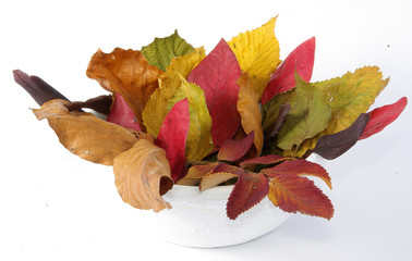 jesienne liście w donicy na białym tle