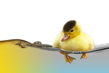 The yellow cute duckling swimming on water wave isolated on white background