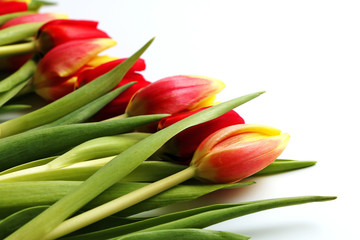 Multicolored spring tulips on a white background. Card (background) on the 8th of March