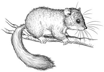 Ein niedlicher Siebenschläfer - Vektor-Illustration