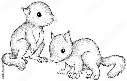 ausmalbild eichhörnchen pdf