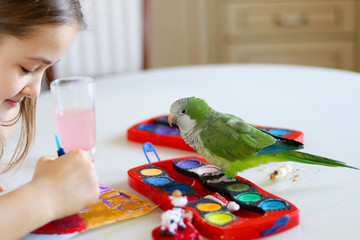 The green quaker parrot is posing on paints while his owner - beautiful toddler girl is painting a picture sitting at the table
