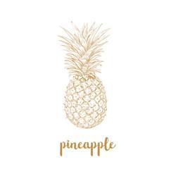 Pineapple sketch vector illustration.
