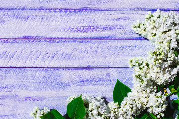 lilac flowers on wooden background with copy space.