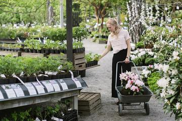 Woman loading plants on wheelbarrow in garden center