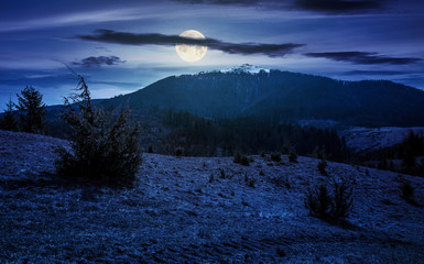 mountain with snowy peak in springtime at night in full moon light. forested hillsides with weathered grass.