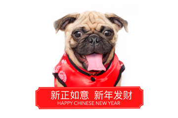 Portrait of Happy Fawn Color Pug Dog wear a red cheongsam Chinese traditional Cloths. Welcome Chinese New Year 2018,Concept Happy dog year. isolated white background.