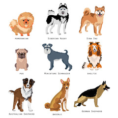 Set of funny dogs of different breeds. Purebred dogs collection.
