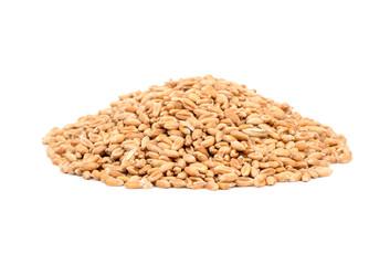 Pile wheat grain