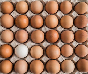 one white egg among brown in the tray.