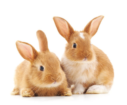 Two small rabbits.