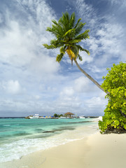 alone green palm on the beach and view to port harbor on Maldives island
