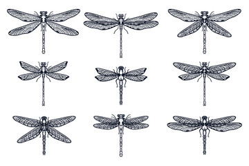 Set of Hand drawn stylized dragonflies outline isolated on white background. Suitable for coloring or illustration for sticker