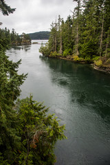 View of coastline with evergreen tree forest off Pender Island, British Columbia, Canada