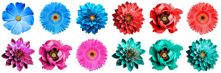 12 surreal exotic high quality flowers macro isolated on white. Greeting card objects for anniversary, wedding, mothers and womens day design