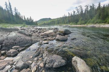 Papiers peints Rivière de la forêt Northern taiga river in the summer.