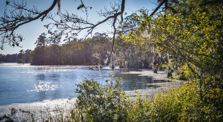 Stagnant Swamp