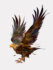 Wall Mural - drawn isolated color flying bird eagle
