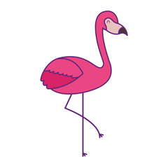 pink flamingo bird exotic image vector illustration