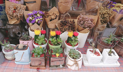 Varieties of cactus pots and dried flower bouquets on table at a flower shop